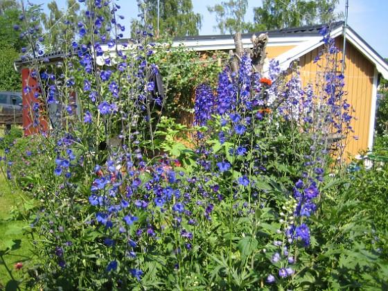 2010-07-09 IMG_0057 Granudden Färjestaden Öland