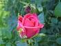 IMG_0025  2010-07-12 IMG_0025