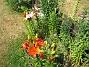 IMG_0039  2010-07-12 IMG_0039