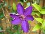 IMG_0002  2010-07-13 IMG_0002