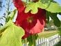 IMG_0025  2010-07-13 IMG_0025