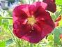 IMG_0030  2010-07-13 IMG_0030
