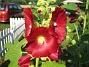 IMG_0023  2010-07-15 IMG_0023