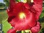 IMG_0026  2010-07-15 IMG_0026