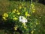 IMG_0039  2010-07-15 IMG_0039
