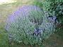 IMG_0043  2010-07-15 IMG_0043