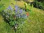 IMG_0044  2010-07-15 IMG_0044