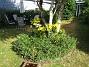 IMG_0024  2010-07-19 IMG_0024