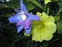 IMG_0044  2010-07-19 IMG_0044