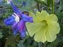 IMG_0045  2010-07-19 IMG_0045