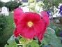 IMG_0047  2010-07-19 IMG_0047