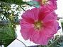 IMG_0052  2010-07-19 IMG_0052