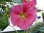 IMG_0053  2010-07-19 IMG_0053