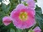 IMG_0056  2010-07-19 IMG_0056