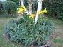 IMG_0062  2010-07-19 IMG_0062