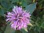 IMG_0073  2010-07-19 IMG_0073