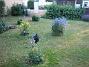 Granudden  2010-07-19 IMG_0094