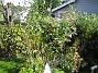 Fjärilsbuskar  2010-09-12 IMG_0008