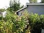 Fjärilsbuskar  2010-09-12 IMG_0010
