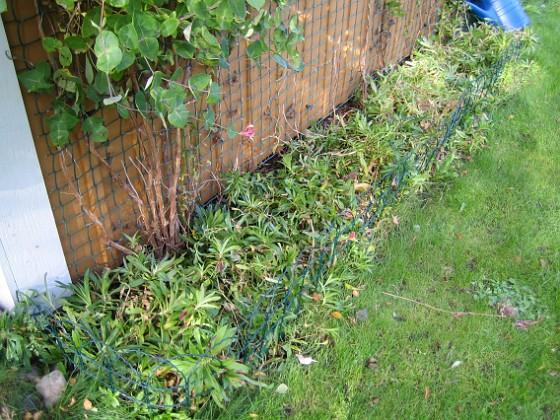 Södra gaveln Jag har rensat och gjort plats för nästa års borstnejlikor.&nbsp 2010-10-03 IMG_0035 Granudden Färjestaden Öland