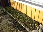Altanen  2011-03-26 IMG_0045