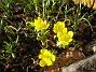 Vintergäck  2011-03-26 IMG_0046