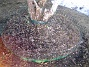 Björken Nu har jag rensat! 2011-03-26 IMG_0053