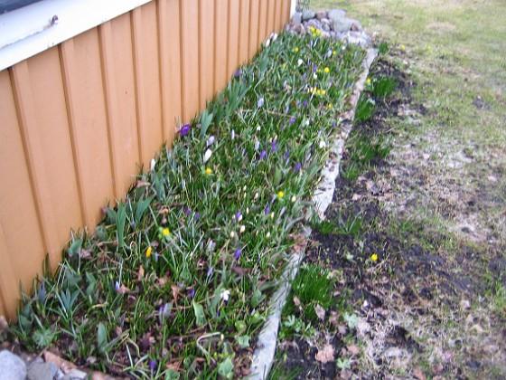 2011-04-02 010 Granudden Färjestaden Öland