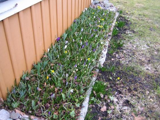 2011-04-02 011 Granudden Färjestaden Öland