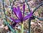 Iris  2011-04-02 021