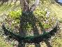 Krokus  2011-04-09 010