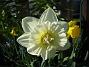 Narciss  2011-04-24 019