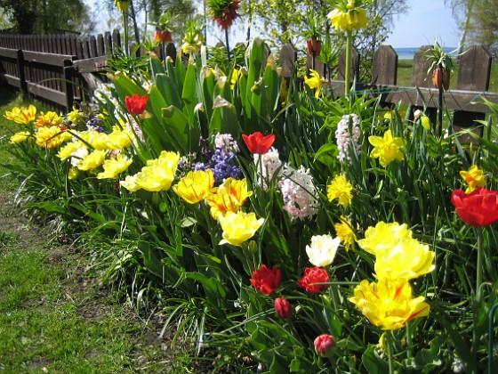 Tulpaner och Hyacinter {  }