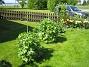 Riddarsporrar  2011-05-22 IMG_0058