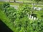 IMG_0019  2011-05-29 IMG_0019