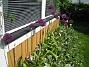 Allium  2011-05-29 IMG_0025