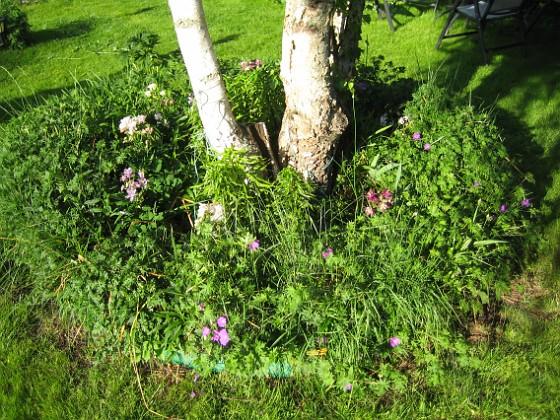 2011-06-02 IMG_0070 Granudden Färjestaden Öland