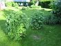 IMG_0071  2011-06-02 IMG_0071