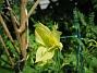 Akleja  2011-06-06 IMG_0088