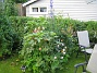 IMG_0043  2011-06-24 IMG_0043