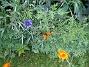 IMG_0047  2011-06-24 IMG_0047