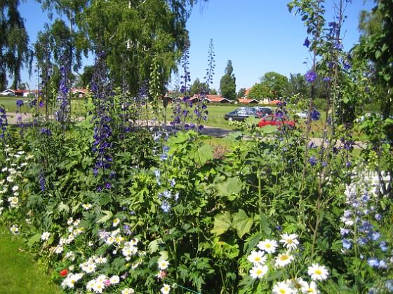 Granudden  2011-06-27 IMG_0098 Granudden Färjestaden Öland