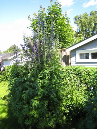 Granudden  2011-06-27 IMG_0106 Granudden Färjestaden Öland