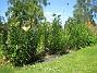 IMG_0046  2011-06-27 IMG_0046