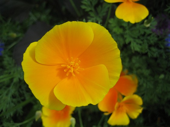 Sömntuta { Den här orangeskimrande nyansen är svår att beskriva. Men vacker är den! }