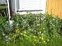 Granudden  2011-07-05 IMG_0016