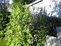 Granudden  2011-07-05 IMG_0028