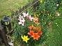 Liljor Jag blir aldrig trött på att ta kort på mina vackra Liljor. 2011-07-07 IMG_0001