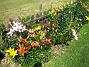 Liljor En solig dag på Granudden. 2011-07-09 IMG_0001