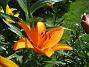 IMG_0015  2011-07-12 IMG_0015